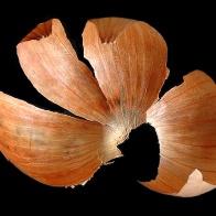 onionskin