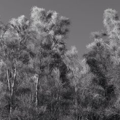 windy-trees2