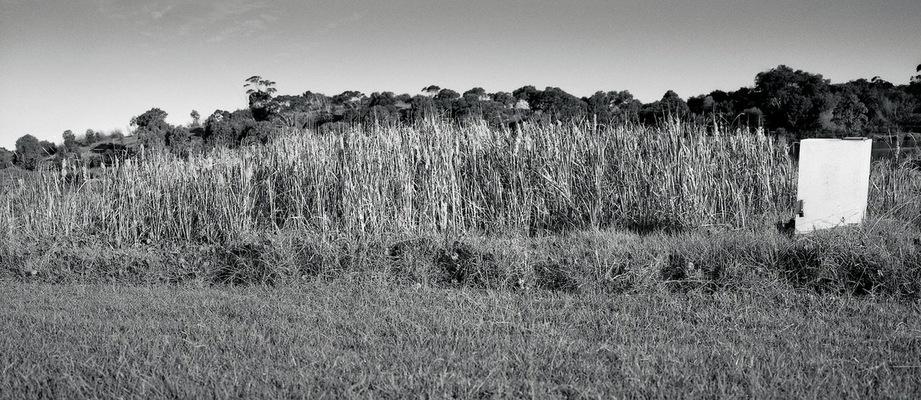 pk-reeds-sml2