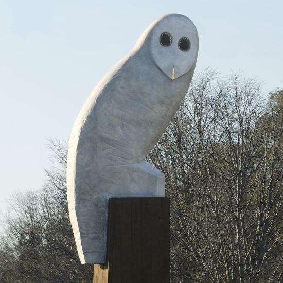 550_Owl